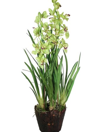 Silk Flowers & Plants: Orchid Display